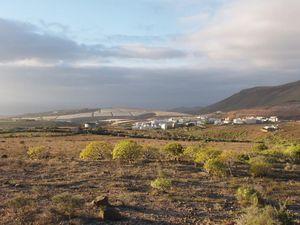 Campo canario