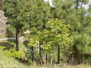 Árbol-tenedor