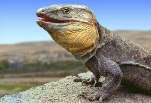Los lagartos de Tamaraceite y su atroz exterminio