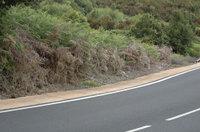 Aspecto de los márgenes de las carreteras donde se han aplicado estos herbicidas.