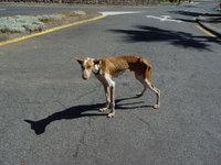 Perros de caza abandonados