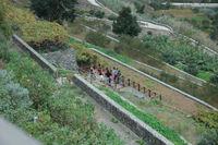 Vista parcial de la finca. Foto del Diario de Tenerife
