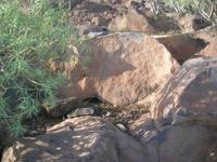 Aquí podemos ver los únicos grabados que sobrevivieron a la masacre cometida en Lomo Gordo (Tenerife)